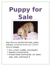 Lab 1-1 Puppy for Sale Flyer.docx