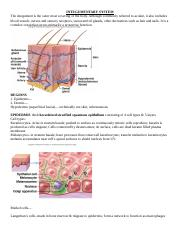 integumentary notes with BLANKS
