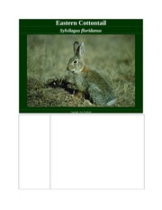 Eastern Cottontail Notes