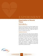 42-0016-00-02-EXP, Organization of Muscle Tissue V-Scope MOD