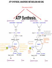 Lecture 13 Friday, June 10 (ATP Synthesis, Anaerobic Metabolism and GNG).pdf