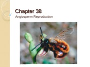 Chapter 38_39 Reproduction_Signals S14