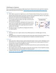 Microbiology DNA Repair Notes.pdf