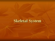 SKELETAL+SYSTEM+LECTURE+TWO