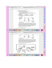 50 Review of Endocine notes.pdf