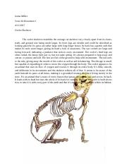 Ocelot Skeleton