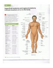 Visual Anatomy and Physiology Ch. 1 pg 24.png