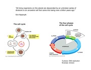 13) Cell Cycle