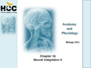 Chapter_16_Neural_Integration_II