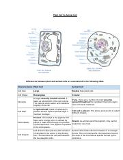 Plant Cell Vs Animal Cell.doc