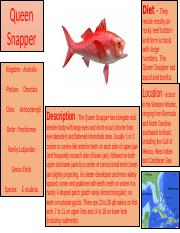 Queen Snapper (Prodject).pptx