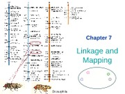 7 Linkage & Mapping