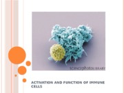 14 Activation and function of T and B cells-1