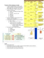 2_20_ProteinsOtherMacromolecules.docx