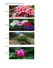 HTML Table with Images.html