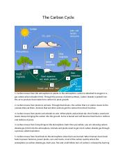 The Carbon Cycle.docx