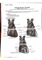 anatomy review the heart homework