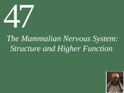 Ch47 Lecture-The Mammalian Nervous System (1)