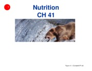 Ch 41 - Nutrition (1 slide per page)