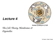 CellTheoryMembranesOrganelles