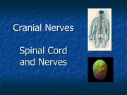 Crainal Nerves, Spinal Cord and Nerves