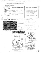 Details of a Neuron Notes