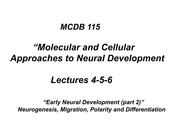 mcdb 153 lecture 4-5-6