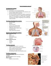 Intro to Anatomy Lecture 4 (1).pdf
