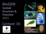 2012 Lecture 16 (Osmoreg) UPLOAD
