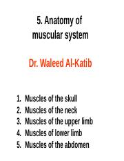 6. Anatomy of  muscular system-Edit.ppt