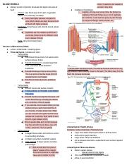 Blood Vessels.pdf