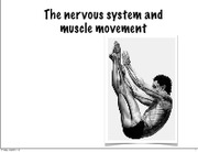 Lecture 31 Nervous System and Muscle Movement