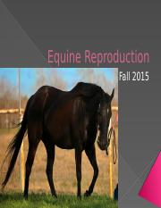 Equine Reproduction.pptx