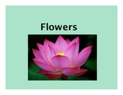 Flowers, Angiosperm Lifecycle, Pollination, Fruits - Lecture Material