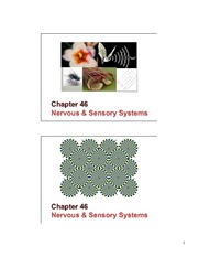 46 Nervous and sensory systems slides