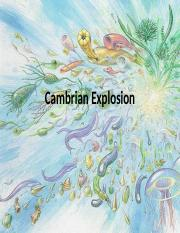 Cambrian Explosion.ppt
