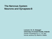 7 B-The Nervous system, Neurons and synapses