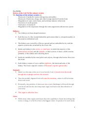 Study Guide Urinary and Reproductive. .docx