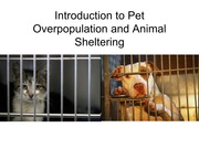Pet Overpopulation and Animal Sheltering