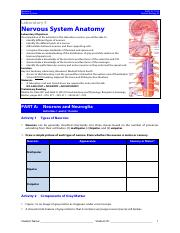 HBIA Lab 5 Nervous System Anatomy