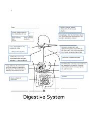 Tutorial 1 digestion activity worksheet 1.docx
