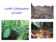 Lec08 Colonization of Land post