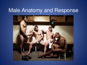 6 Male Anatomy and Response