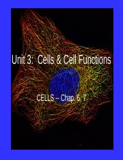 Ch 4 CELLS notes