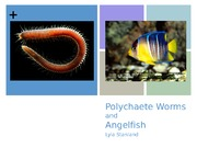 HON 210 Polychaete Worms and Angelfish Presentation