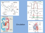 Circulation and blood 8