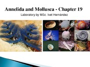12._Annelida_and_Mollusks