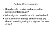 Cellular_Communication_f07