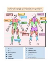 Copy of Muscle chart identification activity-- # 2 text boxes - Jessie Imhoff.jpeg