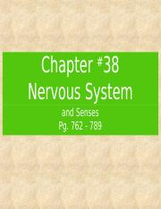 Lecture - Chapter 38 - Nervous System.ppt